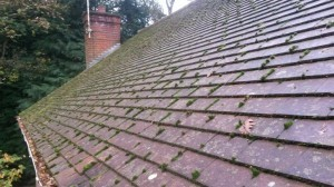 moss and other growth on roof tiles