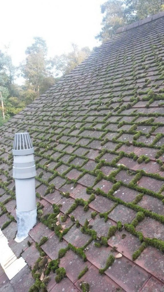 roof moss removal to clay tiles after moss removed manually before - How To Kill Moss On Roof