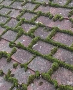 Closeup of moss on roof