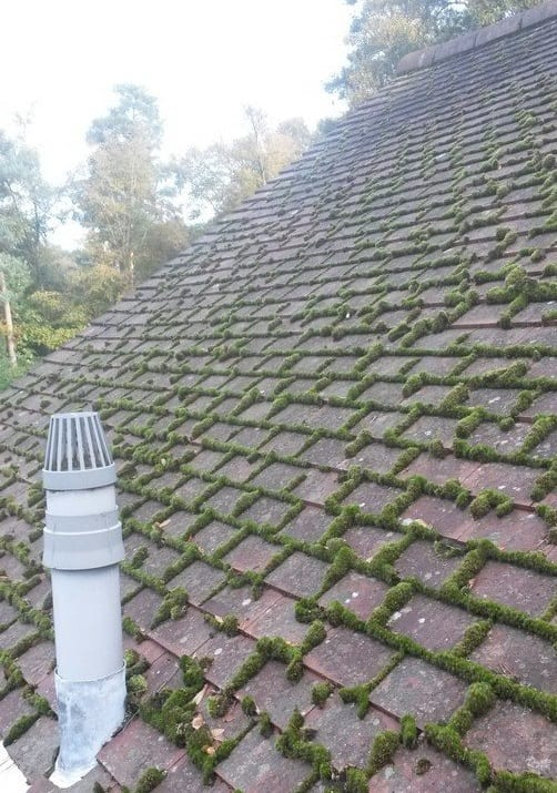 Roof moss on tiles