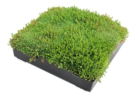 Sedum flat roof tray