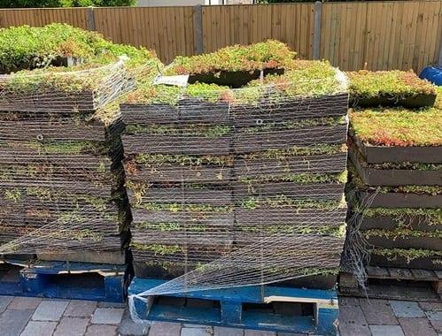 Sedum trays stacked