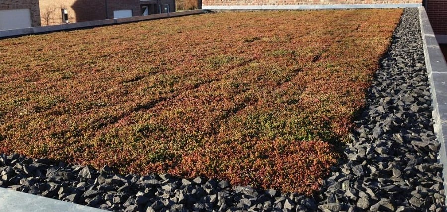 Green Flat Roof Cost